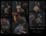 Black Squirrel Life Size III by hontor