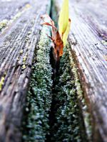 Life Grows by JeremyC-Photography
