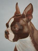 boston terrier by kirkkerndl