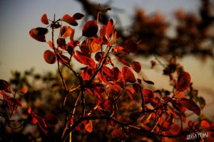 red bush by gameover2009