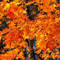 The Golden Autumn by LindaMarieAnson