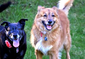 Buddy and Bella by Kaitlin73