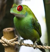 FrogBird Vertical copy by AleElfish