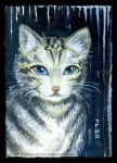 Cat with blue eyes by Rinmeothichca