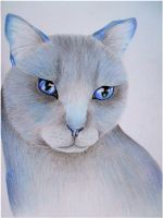 Bluestar by x----eLLiE----x