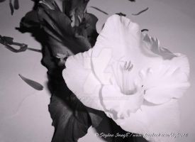 Flowers (Black and White) by Skyline46