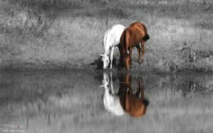 Two horses by Vikarus