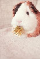 Yummy by Guineapigrage