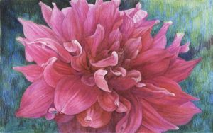 Pink Flower in Colored Pencil by flowercs