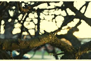 Sun Soaked Branches by GrotesqueDarling13