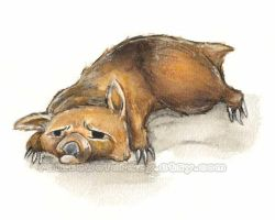 Despairing Wombat by sobeyondthis
