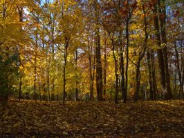 Autumn Forest 1 by bean-stock