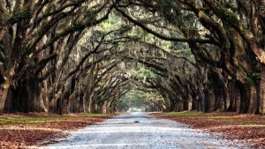Wormsloe Plantation in Savannah, Georgia._6 by PhotoshopGirl29