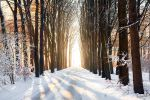 Winter avenue by WouterPera