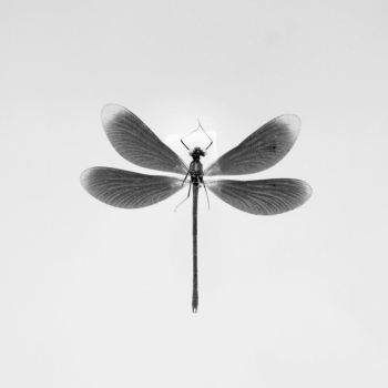 Dragonfly. by JinnyJoe