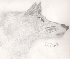 Realistic Wolf Attempt by FFRedXIII