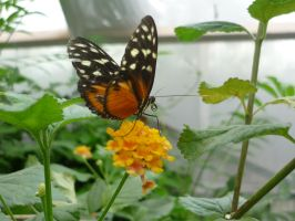 Animals - Butterfly 02 by Stock-gallery