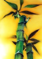 Bamboo Tree by lordMon