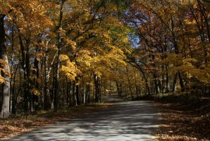 Fall on Sunday by olearysfunphotos
