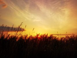 Grass in rays of sunset by MrFotkerman