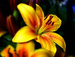 Lilly 2 by friartuck40