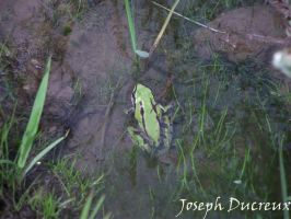 Frog 2 by Jos-Duc