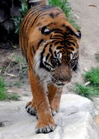 Lormet_Zoo-Animals0451closeup by Lormet-Images