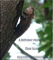 A friend for Selina by jennystokes