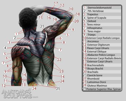 Anatomy for Sculptors 9 by anatomy4sculptors
