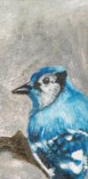Do Not Say Blue Jay by Car-Ma