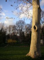 The Eye of the tree by Rounette