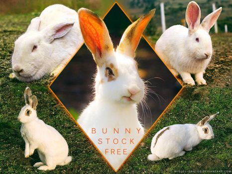 Bunny Stock Pack FREE by Miguel-Santos
