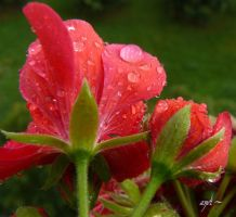 afternoon of a rainy day~1 by andi40