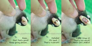 3 Levels Of Tickling Bird by emmil
