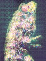 The Frog by mtmac