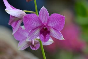 Small Orchid by LukeFel