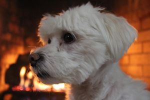 ~Sitting by the Fire~ by l0st-amul3t