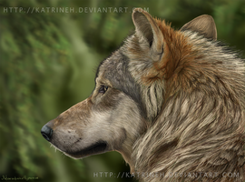 Wolf portrait 2007 by KatrineH