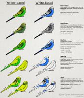 Budgerigar colour genetics by RiverRaven