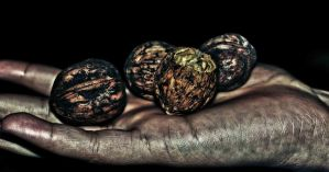 Nuts by musi1