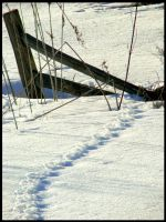 Tracks and Fence by Seyser