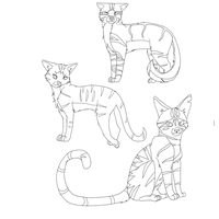 Warrior Cats Sketches by miudream