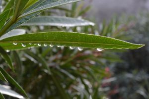 Drops after rain of 10/11/2014 by A1Z2E3R