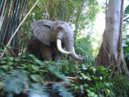 Elephant by CRStock