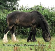 Random Horse Stock by MustangStock