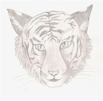 tiger by Eveliien