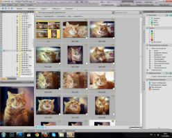 Folders - They're full of cats. by Eevl