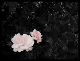 faintly pink by vertis
