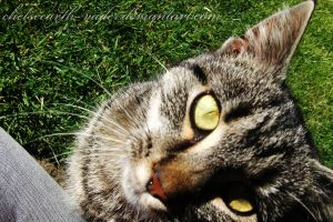 cat 023. by Chelseearth-Vader