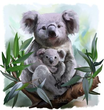 Two Koalas by Kajenna